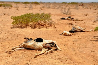 2011_Horn_of_Africa_famine_Oxfam_01